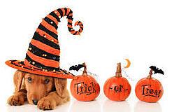 Halloween USA Safety - Pets