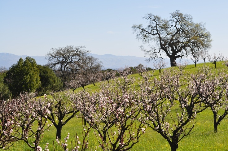 Home_security_Systems_los_altos_Hills_Santa_Clara_County_California